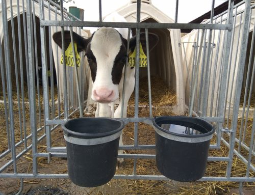 Качественные стартерные комбикорма для телят в наличии на складе в г. Самара