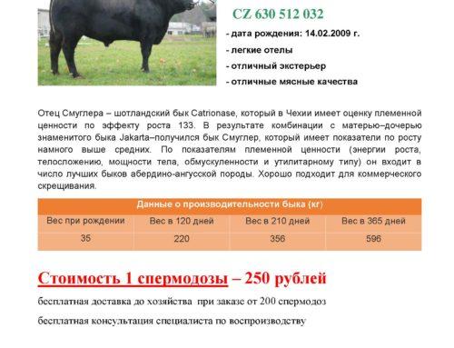 Специальное предложение семени племенных быков мясных и красно-пестрой голштинской пород.