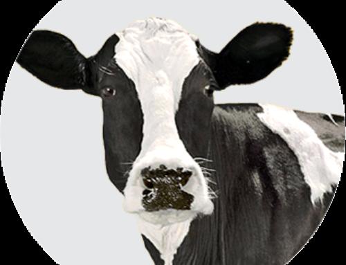 Приглашение на семинар  «Прогрессивные технологии в молочном скотоводстве.  Как получить 96-97% телок в стаде »