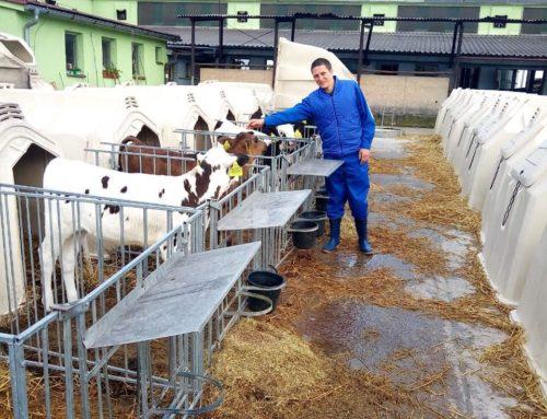 Стажировка специалистов АО «Нива» ( Самарская область ) на предприятии MLÉČNÁ FARMA LUBINA чешской компании CBS – Czech Breeding Services s.r.o. завершена.