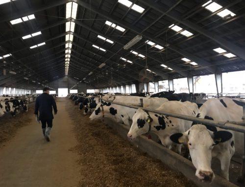 Посещение ферм Чешкой Республики с 18 по 21 ноября 2019 года. Ферма ZERAS A.S. RADOSTIN