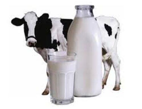 Хотите повысить качество производимого молока?